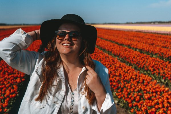 Tulip fields in the Netherlands, Dutch tulip, Tulip season